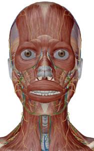 顎関節症 図